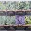 Semillas aromaticas (varias consultar stock)